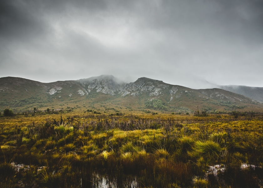 Photo of the Tasmanian wilderness with a mountain in the background